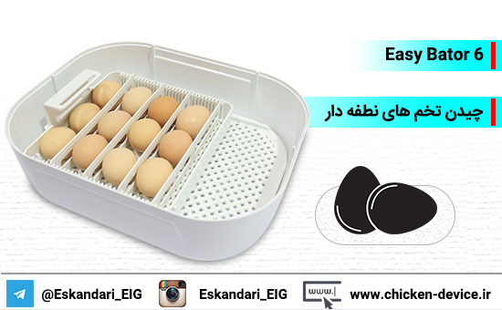 قرار دادن تخم های نطفه دار در دستگاه جوجه کشی