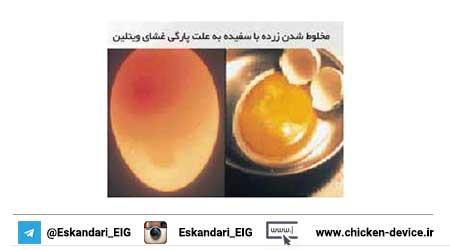زرده و سفیده تخم مرغ