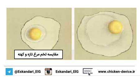 مقایسه تخم مرغ تازه و کهنه