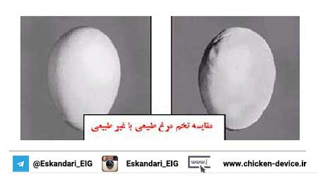 مقایسه تخم مرغ طبیعی و غیر طبیعی
