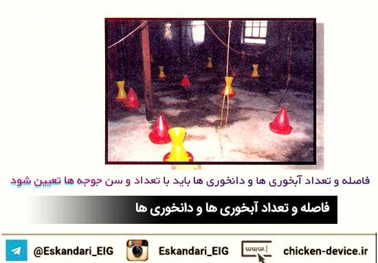 سیستم ابخوری در مرغداری گوشتی