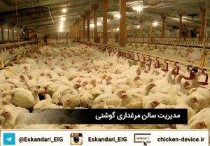 مدیریت سالن مرغداری گوشتی