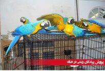 پرورش-پرندگان-زینتی-در-خانه
