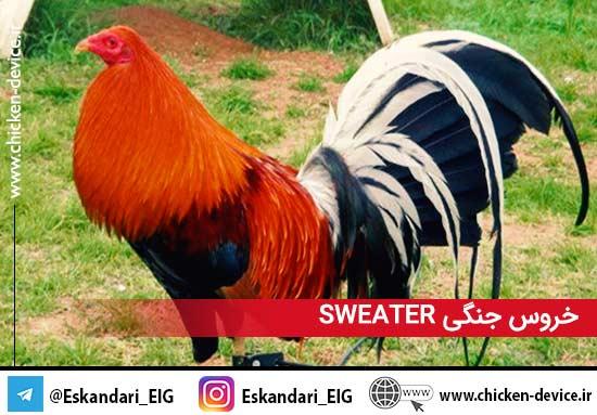 خروس جنگی sweater2