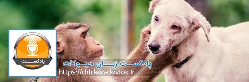 پادکست زبان حیوانات