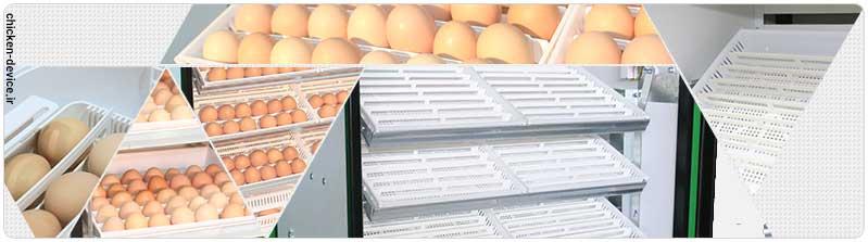 قرار دادن تخم در دستگاه جوجه کشی