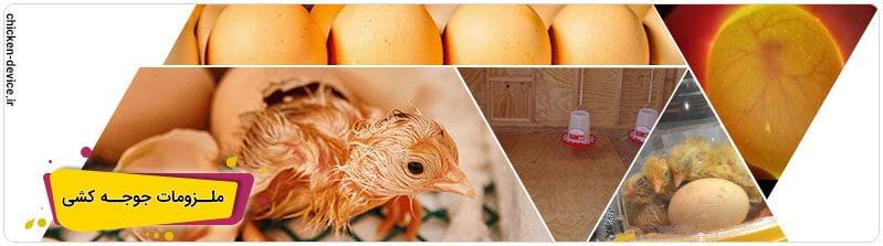جوجه کشی از مرغ چه لازم است