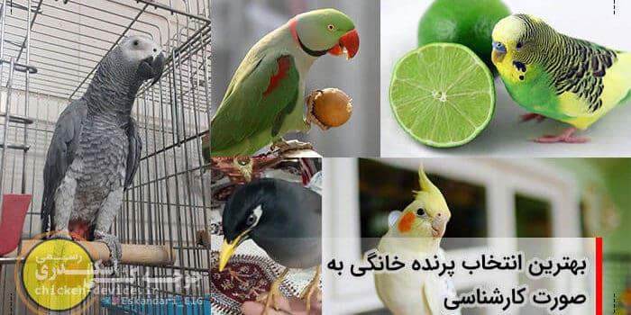 انتخاب پرنده خانگی مناسب
