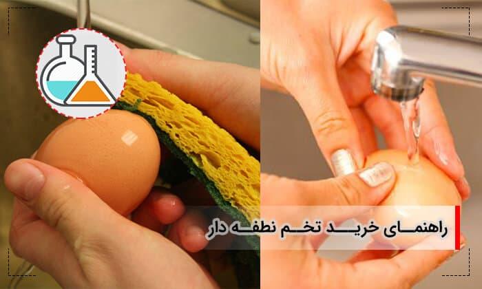 خرید تخمه مرغ نطفه دار