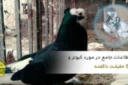 اطلاعات جامع در مورد کبوتر یا کفتر