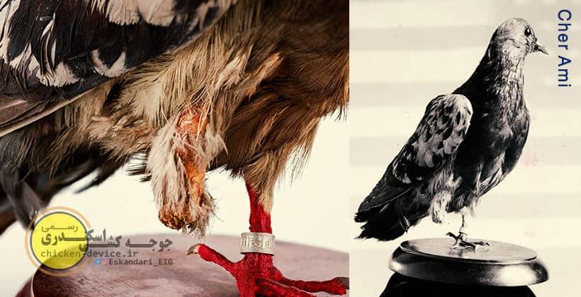 Cher Ami کبوتر