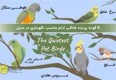 پرنده خانگی آرام