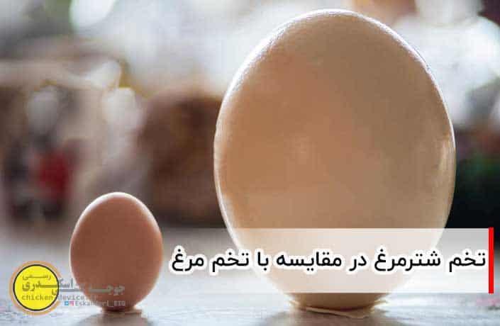 تخم شترمرغ و تخم مرغ