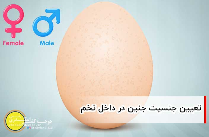 تشخیص جنسیت جنین در داخل تخم نطفه دار