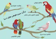 طوطی-های-رنگی-دنیا