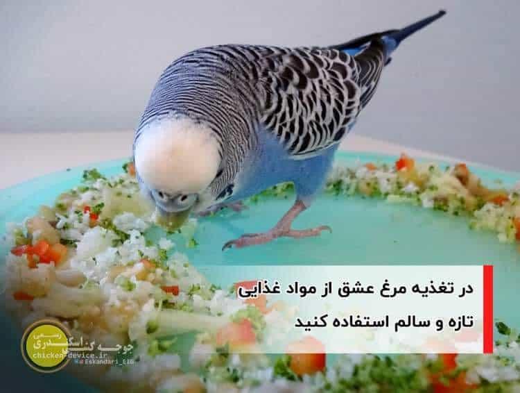 تغذیه مرغ عشق با مواد غذایی سالم