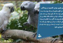 کلسیم-پرندگان
