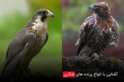 Familiarity-with-different-types-of-birds-of-prey