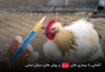 آشنایی-با-بیماری-های-مرغ-و-روش-های-درمان-سنتی