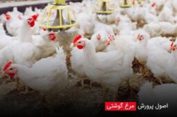 Principles-of-broiler-breeding