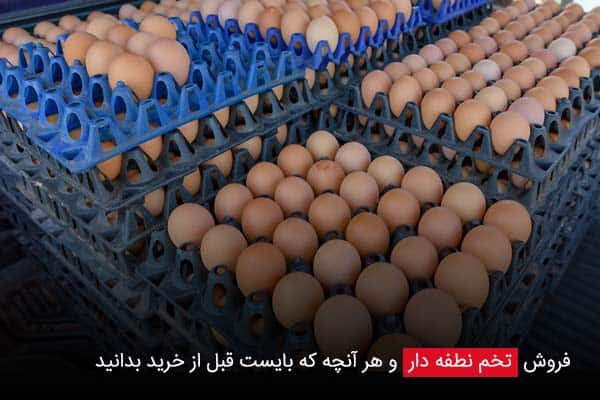 فروش تخم نطفه دار و هر آنچه که بایست قبل از خرید بدانید